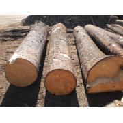 Busteni de rasinoase de la Sc Woodex Utility Srl
