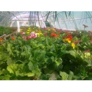 Biosolaris Producator Plante