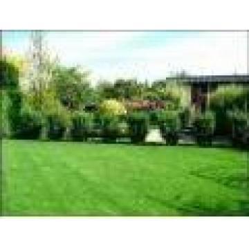 Garden Creativ Design SRL