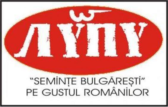 Seminte bulgaresti de la All Nuts Srl