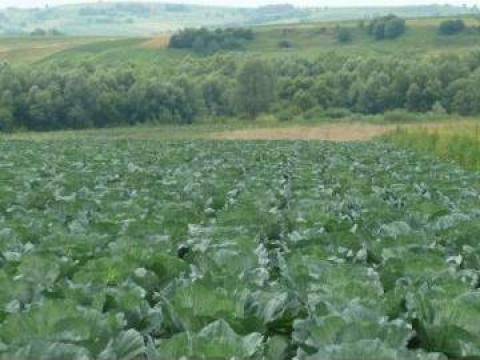 Plan de afaceri pentru legumicultura in camp de la Duplicom Grup Srl.