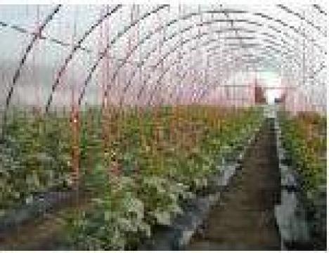 Solarii pentru legume si flori de la Sere Profesional Product