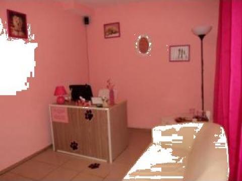 Servicii cosmetice salon Beauty for Beasts