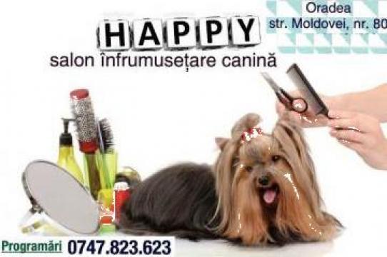 Coafura, frizerie canina de la Happy Dog Oradea