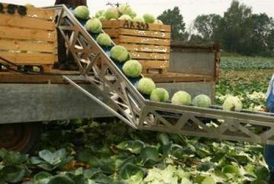 Banda transportoare pentru recoltare de varza