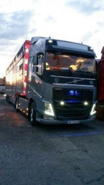 Transport animale vii international de la Dobrota Trans
