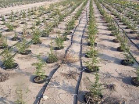 Furtun picurare 40 de la Imd Horticulture Systems Srl