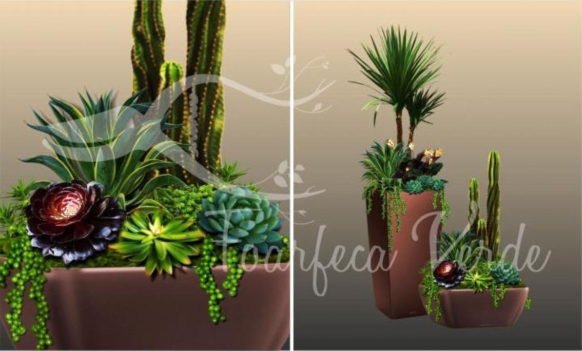 aranjamente cu plante de interior si terrarium dragomiresti vale green art holding id 11894155. Black Bedroom Furniture Sets. Home Design Ideas